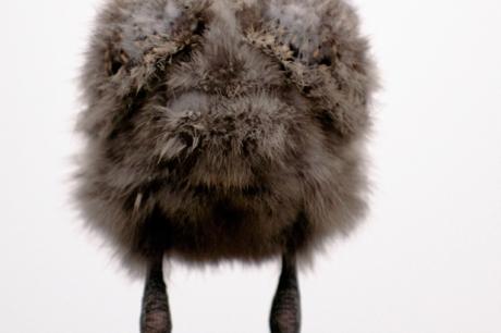 Wintervögelchen