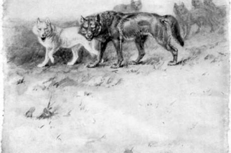 Lobo / Lettres d'Ixelles
