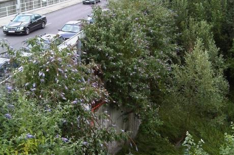 Gardening The Urban Fabric