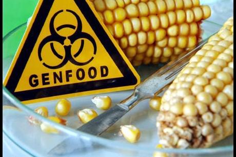 Genetisch gemanipuleerde of gemodificeerde organismen - in wiens belang?