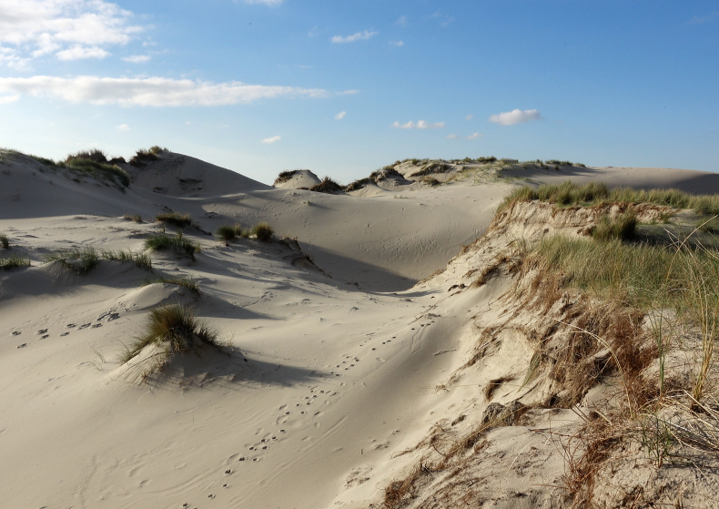 Voices of the Dunes + roundtable discussion