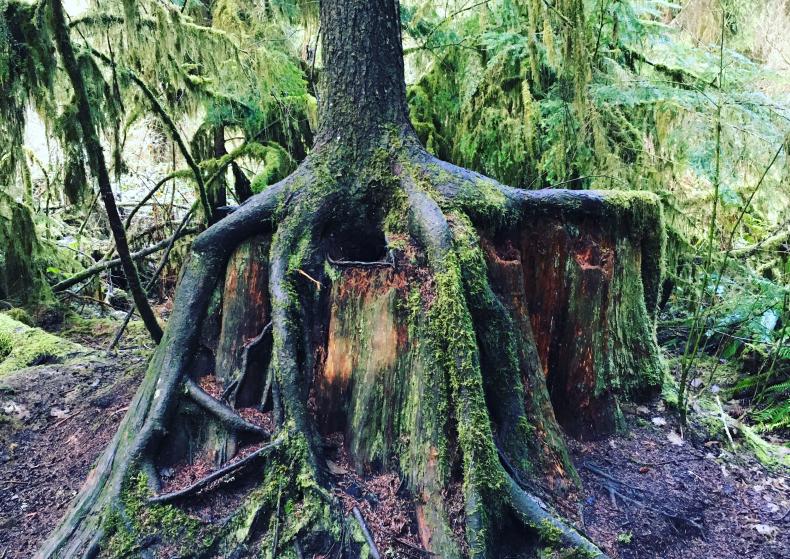 activiteiten voormiddag – Listen Here: These Woods